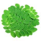 Semillas de Moringa o Árbol de la Vida 25 Semillas de Moringa Oleifera o Ben