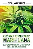 Cómo crecer marihuana: De la semilla a la cosecha – La guía completa paso a paso para principiantes