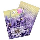 900x semillas de lavanda con alta tasa de germinación - Planta medicinal versátil e ideal para abejas y mariposas (incl. Libro electrónico GRATUITO)