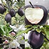 150 piezas de piel negra para semillas de manzana, deliciosas plantas de frutas bonsái, decoración del hogar, jardín, semillas de manzana para mujeres, hombres, niños, principiantes, jardineros regalo