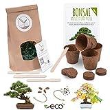Bonsai Kit incl. eBook GRATUITO - Set con macetas de coco, semillas y tierra - idea de regalo sostenible para los amantes de las plantas (Pino Piñonero + Árbol del Ámbar)
