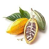 CFPacrobaticS 40 Piezas De Semillas De Fruta De Cacao Germinación De árboles Frescos Crecen Fácilmente, Plantas De Patio De La Granja Casera, Regalos De Jardín De Decoración