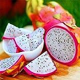 TOYHEART 50 Piezas De Semillas De Frutas De Primera Calidad, Semillas De Pitaya, Suculentas Rústicas, Semillas De Plantas Estéticas De 3 Colores Para Jardín blanco
