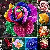 Kisshes Seeds- 40/100Pcs Rose semillas,Semillas de rosas del desierto de Blooms Hogar y Jardín (Rosa roja)