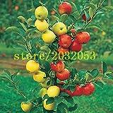 100 semillas de manzano enano árboles bonsai semillas de manzana MINI frutales para plantar jardín de casa