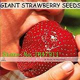 Nuevos grande de la venta del envío libre 100 semillas / Paquete, Súper Gigante fruta de la fresa de Semillas tamaño de una manzana rojo oscuro