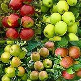 20 piezas Semillas de manzana Miel Crujiente Fruta nativa Árbol de hoja caduca perenne La mejor opción para plantar en el patio familiar Decoración colorida exótica Patio ornamental