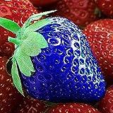 TOYHEART 100 Piezas De Semillas De Frutas De Primera Calidad, Semillas De Fresa, Nutritivas, Ricas En Vitaminas, Multicolores, Plántulas De Frutas No Transgénicas Para La Granja Azul