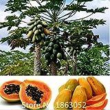 Fruit semillas RARE 20 semillas enano hovey Papaya árbol planta recipiente bonsai árbol para casa jardín planta deliciosa fruta