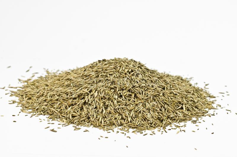 semillas-cesped-4