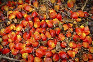 semillas la palma