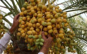 semillas la palma germinación