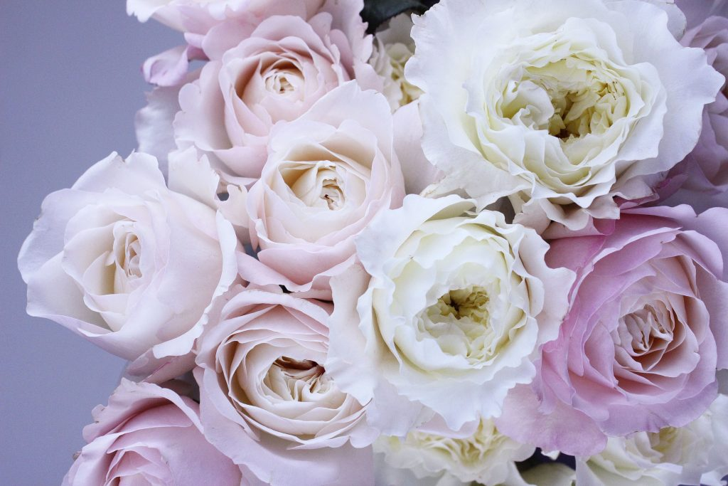 cultivo-semillas-rosas