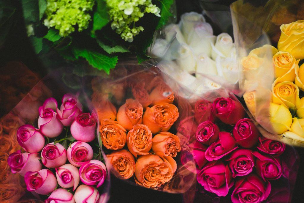 tipos-semillas-rosas