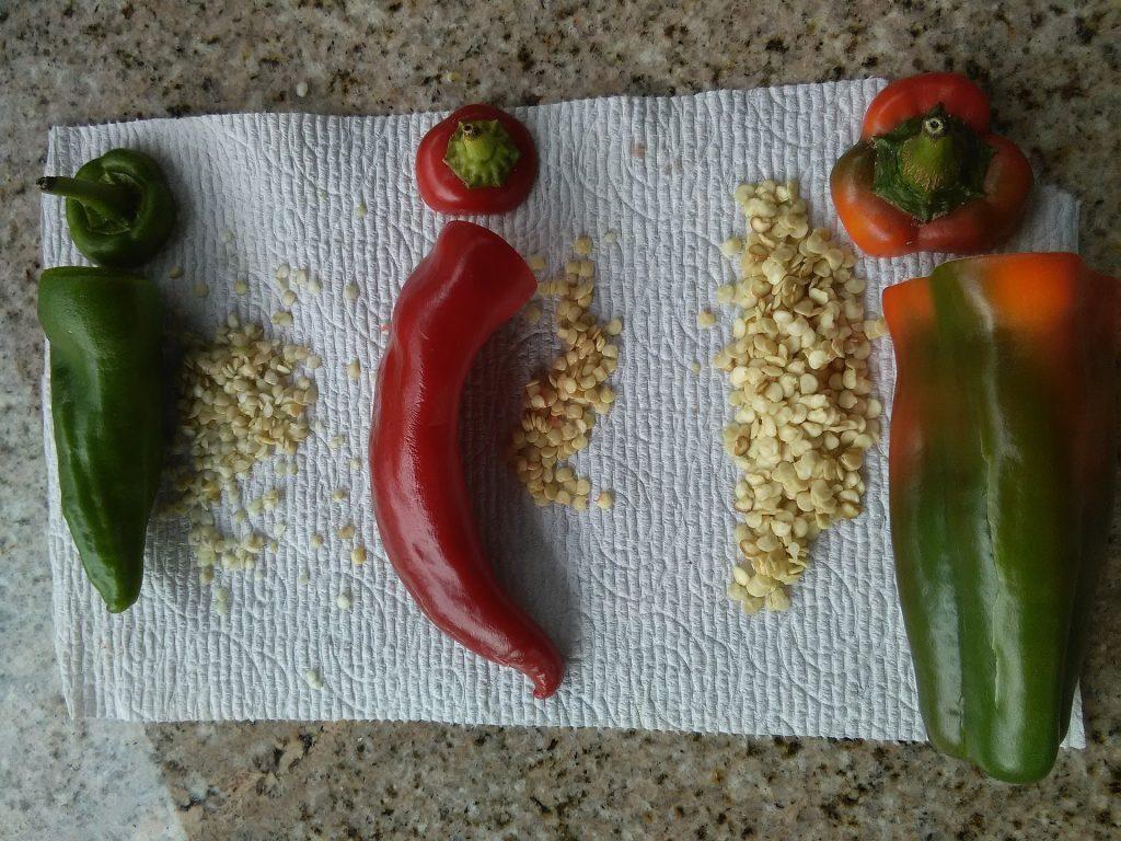 sembrar-semillas-pimiento