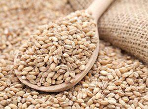 semillas de cebada