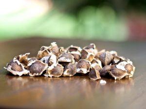semillas de moringa
