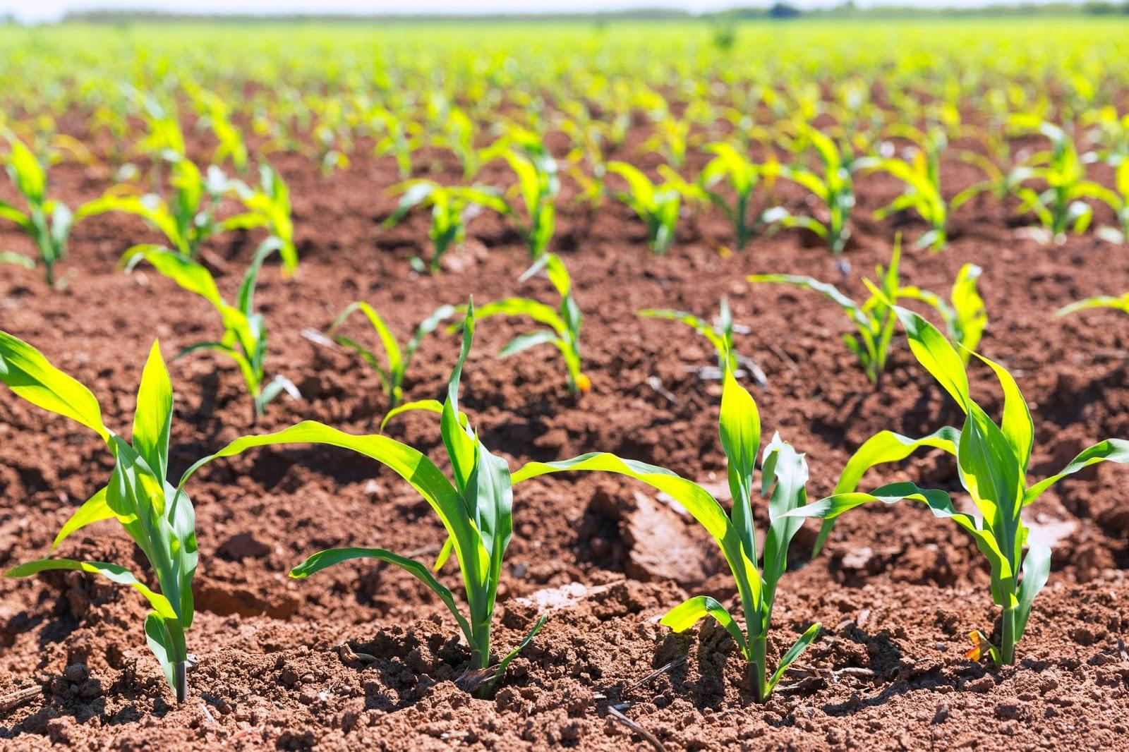Tierra para semilleros