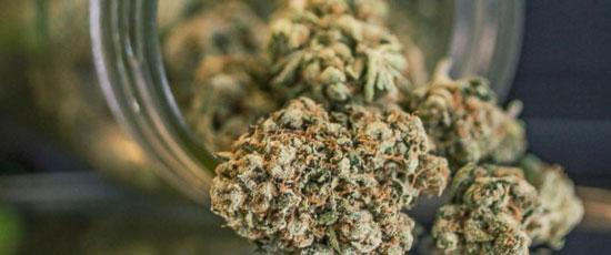 hacer marihuana sintética