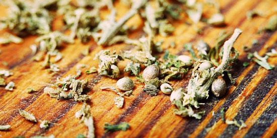 marihuana semillas feminizadas