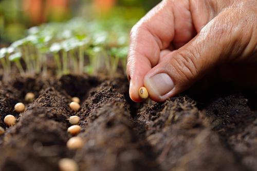 requisitos para plantar semillas