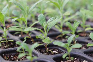 Las semillas ecológicas más demandadas